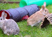 Giochi per coniglietti