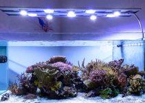 Illuminazione per acquario: Migliori lampade e plafoniere a led