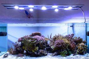 Lampade a led per illuminare l'acquario