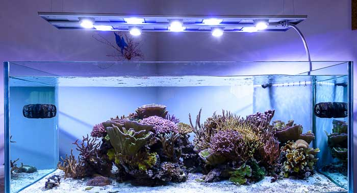 Plafoniera Led Per Acquario Acqua Dolce : Illuminazione per acquario migliori lampade e plafoniere a led