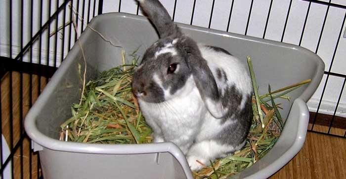 Miglior lettiera per conigli