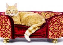 Cuccia da interno per gatti