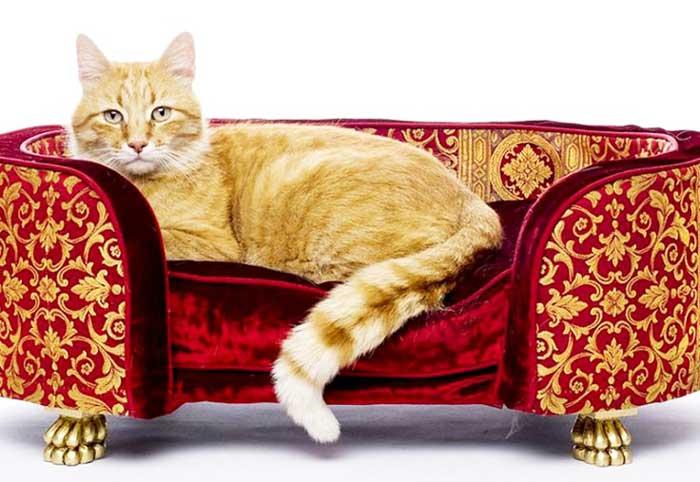 Mobili Per Gatti Fai Da Te : Cuccia per gatti come scegliere la migliore qualità prezzo guida