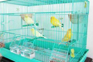 Gabbie e voliere per canarini: come scegliere la migliore? Classifica top4