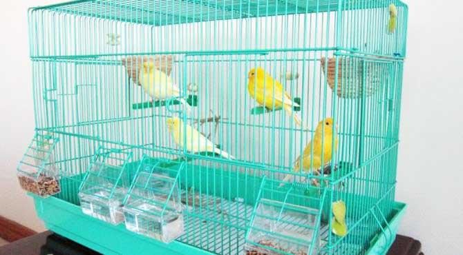Miglior gabbia da allevamento per canarini