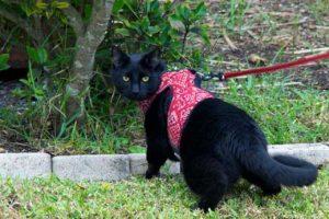 Pettorina per gatti e gattini
