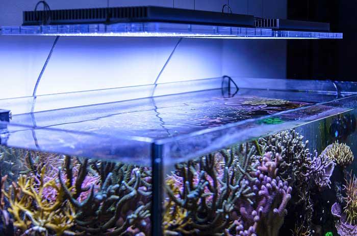 Illuminazione per acquario migliori lampade e plafoniere a led