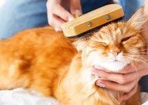 Classifica delle migliori spazzole per gatti del 2020