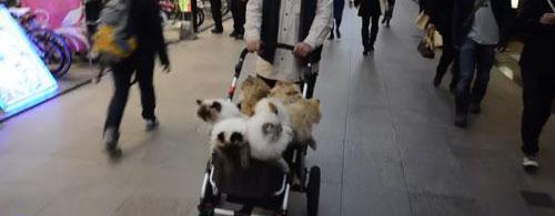 Passeggini per gatti malati e pigri