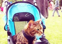 Passeggino per gatti – Classifica TOP4 dei migliori modelli [prezzi e offerte aggiornate]