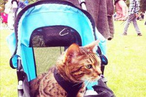 Passeggino per gattini