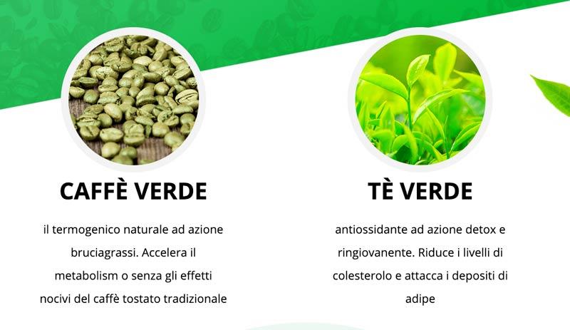 Ingredienti di Green Coffee e Green Tea Plus
