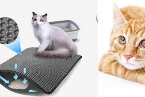 Recensione di Cat e Clean